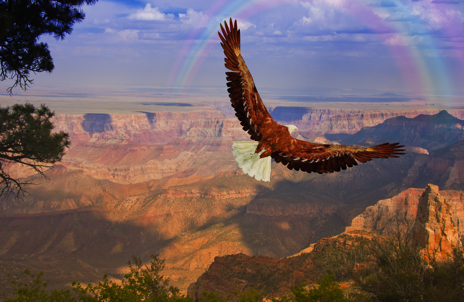 grand canyon Guide to the best hotels and things to do in grand canyon maps, travel tips and more.
